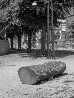 IMGP0252-2019-Träd art-JPG